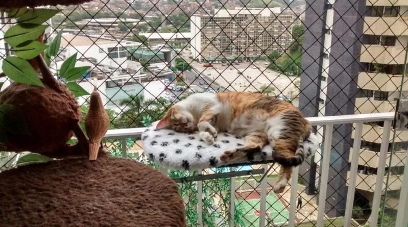 empresa que instala rede de proteção para animais em são paulo